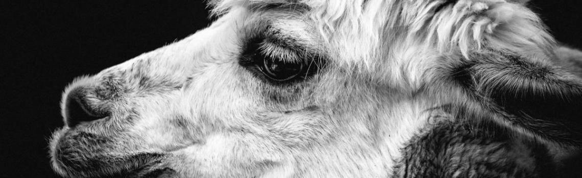 Alpaca de aanschaf