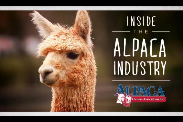 Alpaca industry